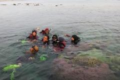 Penelitian Biota laut Spon