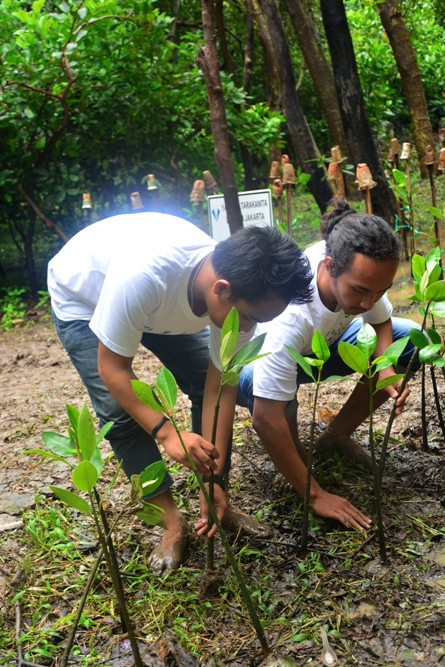 Sedang menanam Mangrove