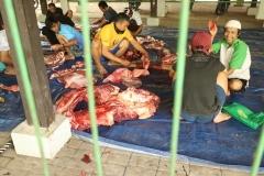 Proses pemotongan hewan qurban oleh karyawan Universitas Nasional