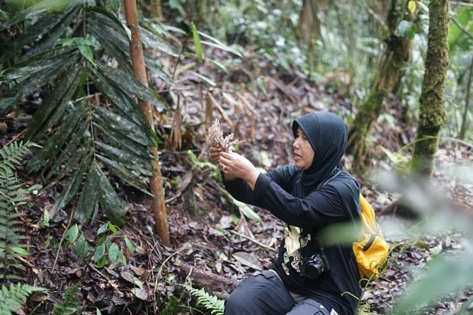 Dosen Fakultas Biologi Dra. Noverita, M. Si melakukan pengamatan pada temuan jamur yang diperoleh