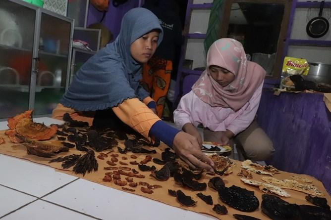 Proses pengerian jamur