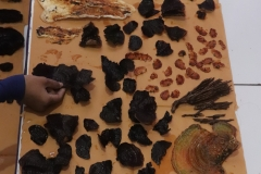 Seluruh jamur yang diperoleh di cuci dan dilakukan pengeringan sebelum dilakukan proses isolasi