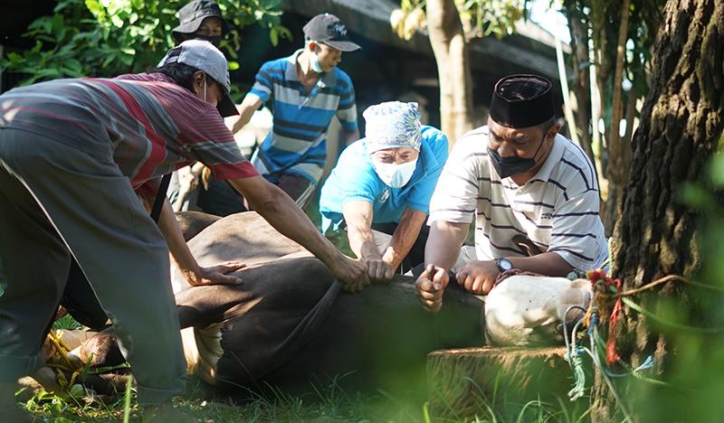 Proses pemotongan hewan qurban di area Masjid Sutan Takdir Alisjahbana, Selasa 20 Juli 2021