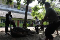 Proses pemotongan hewan qurban oleh karyawan Universitas Nasional di area kampus bambu kuning, Selasa 20 Juli 2021