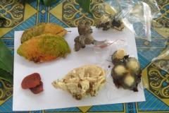 Macam-macam tumbuhan di Tuanan, kalimantan