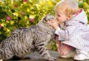 Memeluk Kucing Berbahaya
