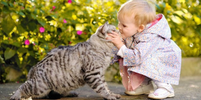 unas-kesehatan-bahaya-memeluk-kucing