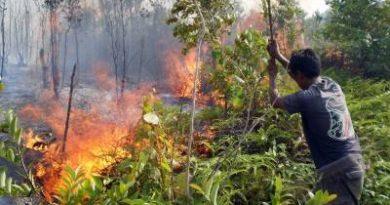 unas-kebakaran-hutan-1