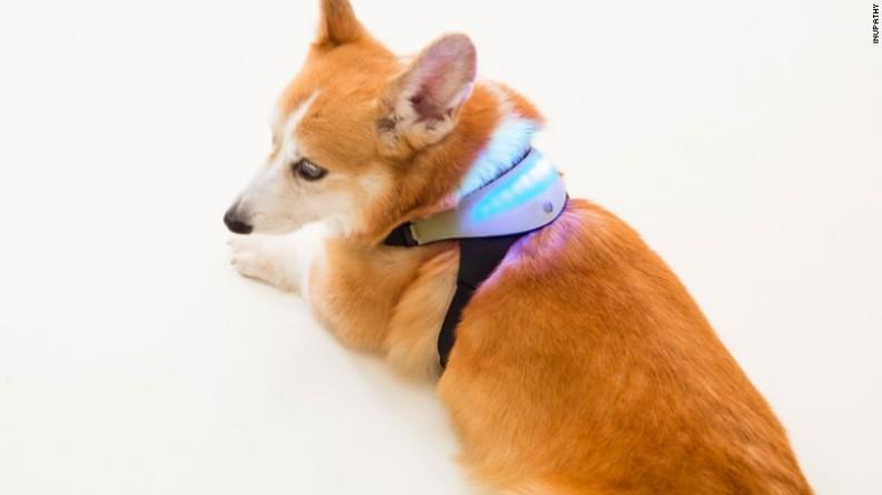 ALat Komunikasi Anjing