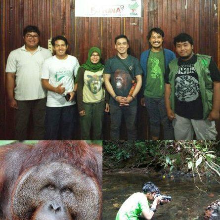 Fakultas Biologi Monitor Orangutan Pongo pygmaeus pygmaeus di Kalimantan