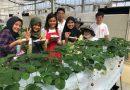 Mahasiswa Faperta Membagikan Pengalamannya Selama Magang di Jepang